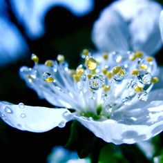 Amazing Macro Photography to Blow your Mind Away Scenic Photography, Macro Photography, Fine Art Photography, Flower Deals, Blue Flowers, Beautiful Flowers, Dew Drops, Rain Drops, Nature Images