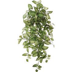 "38"" Hanging Nephthytis Ivy Plant"