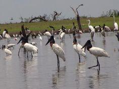 otro bañado es Laguna de Yema, Formosa, Argentina