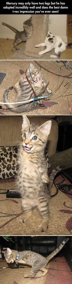 Two legged cat ~ always happy ~ Great Inspiration