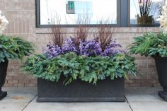 Nice idea for pots when we head into winter but not ready for Christmas look. http://www.deborahsilver.com/