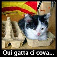 #umorismo #gatti - Barzelletta Time - Google+