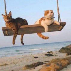 #gato #cute #cat #lindo #beautiful #tumblr #happy #newyear #navidad #feliz #happiness #animal #pet #mascota #ilovecats #babys #baby #ternura #love #amor #sweet #enojado #cats_of_instagram #hermoso #pictureoftheday #ternura
