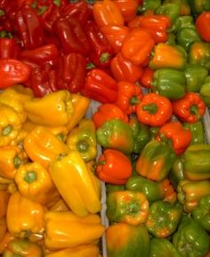 Tip: While all peppers are rich in vitamins A, C, and K, red peppers are bursting with the nutrients! The important vitamins help prevent cell damage and premature aging and help reduce inflammation. Easy Vegetables To Grow, Growing Veggies, Fruits And Veggies, Gardening For Dummies, Gardening Tips, Edible Garden, Easy Garden, Growing Bell Peppers, Red Peppers