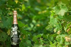 The excellence of raw materials is at the heart of the Perrier-Jouët harvest, and particular attention is given to the noble chardonnays, which lend such particular character to the House wines. #perrierjouet Please Drink Responsibly