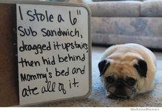 pug-shaming-meme.jpg (500×345)