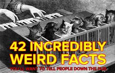 42 Incredibly Weird Facts You'll Want To Tell All Your Friends