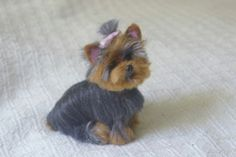 Custom Pet Portrait  / Your Pet in Miniature / by GourmetFelted, $250.00