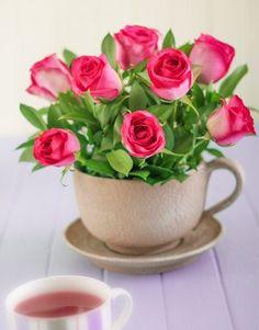 Cerise Roses in a Teacup
