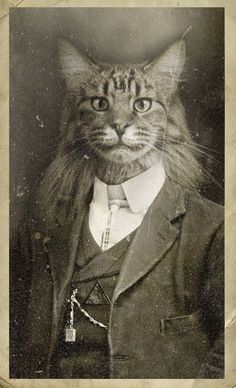 WTF crazy cat lady artwork for sure Crazy Cat Lady, Crazy Cats, Chat Royal, Animals And Pets, Cute Animals, Photo Chat, Cat People, Animal Heads, Pet Clothes