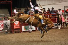 Rodeo in the Arena (Alliant Energy Center - Madison, WI) #horses #riding #rodeo #animals