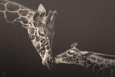 Zoo Animals Photography by Manuela Kulpa – Fubiz™. #Photography #Girafe #Animals #Zoo