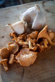 fresh chanterelle mushrooms and elephant garlic