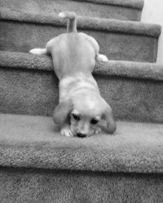 puppylove ♥ Sooooooooooooo CUTE!!!