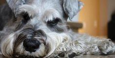Como enseñar a un perro a hacer sus necesidades en un solo lugar