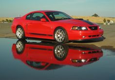 I would like to see your favorite mustang pics old and new anything mustang and well pretty much anything ford [IMG]. 2003 Ford Mustang, Mustang Cobra, Mustangs, My Ride, Sally, Cool Cars, Muscle, Trucks, Bike