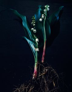 GENTL AND HYERS PHOTOGRAPHY | BOTANICALS | 3