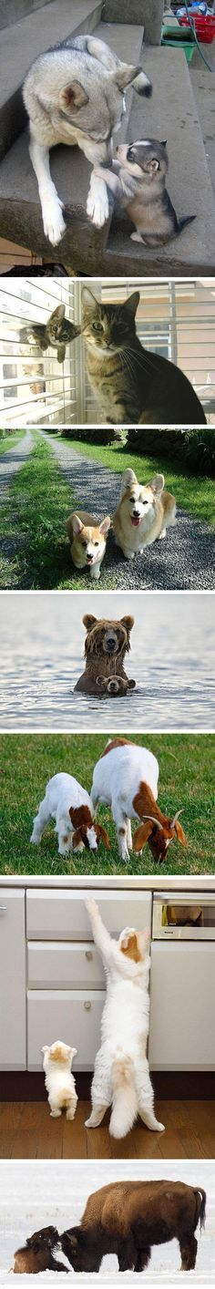 Animals with their miniatures... - The Meta Picture