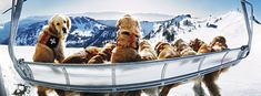 Likely my favorite photograph of all time. I remember when my wife (then my GF) brought me a signed version of this after I mentioned to her once how much I loved this photo. It was in ski magazine years ago. How can you not love it? Goldens and Skiing?
