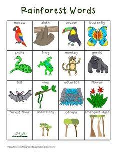 Rainforest Preschool, Rainforest Classroom, Rainforest Crafts, Rainforest Project, Preschool Jungle, Rainforest Habitat, Rainforest Theme, Rainforest Animals, Jungle Animals