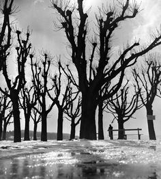 Herbert List :: Wintersonne am Ammersee (Winter sun at the Ammersee). 1952. Vintage gelatin silver print on Agfa-Brovira paper. / source more [+] by this photographer