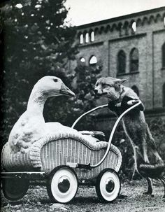 the fox and goose story
