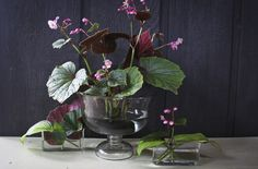 beautyeveryday - Southern Beauty, Creativity, and Food - heartybegonia