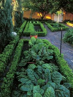 A small buxus hedge contains each plot, dividing up types of vegetables and creating a neat uniform look.