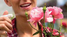 Des conseils pour prendre soin de vos rosiers