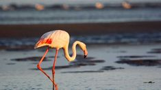 Kajakken en Sandwich Harbour Combo Tour - Swakopmund, Namibië   GetYourGuide Tours