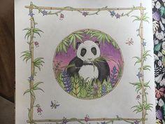 The elusive pastel panda from Johanna Basford's Magical Jungle! #magicaljungle…