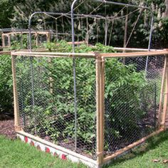 Protect Strawberry Plants From Squirrels With A Cage Wooden Frames Covered With Chicken Wire