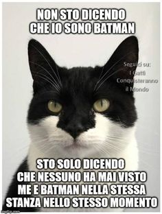 Animals And Pets, Funny Animals, Super Cat, Catwoman, Hulk, Funny Pictures, History, My Love, Memes