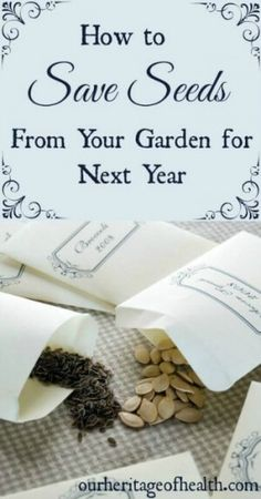 Container Gardening For Beginners Whether you've been gardening for years or whether this is your first year, with a little bit of planning you can easily save seeds from your garden harvest to use again for next year's planting Garden Seeds, Garden Plants, Organic Gardening Tips, Vegetable Gardening, Veggie Gardens, Small Herb Gardens, Allotment Gardening, Gardening Blogs, Balcony Gardening