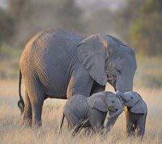 Baby elephants playing...too cute!