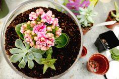 how to build a terrarium - Aquarium-Ersatz Build A Terrarium, Garden Terrarium, Garden Plants, Indoor Plants, Terrariums, Pot Plants, Succulent Terrarium, Container Gardening, Gardening Tips
