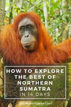 It can be a challenge to travel around wild and rugged northern Sumatra, Indonesia - but here's a itinerary designed to explore the best it has to offer. Best Travel Guides, Travel Advice, Travel Tips, Travel Plan, Travel Ideas, Travel Destinations, Brunei, China Travel, Japan Travel