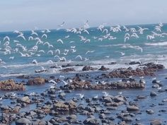 East London –Birds frolicking on the rocks at Gonubie Beach  – wanaabeehere