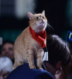 #Bob #Streetcat