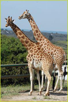 My favourite zoo ever - La Barben.