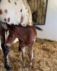 Cute Baby Horses, Baby Farm Animals, Cute Baby Dogs, Animals And Pets, Funny Animal Videos, Cute Funny Animals, Beautiful Horses, Animals Beautiful, Schleich Horses Stable