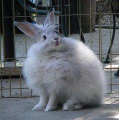 翼のような耳を持つウサギ10