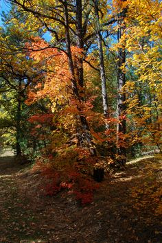 autumn forest, 4th of July Canyon Trail, Carson National Forest, New Mexico