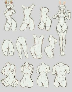 estudio de torso