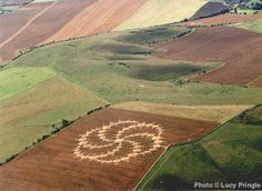 Crop Circle Milk Hill, Wiltshire. 14th Aug 2001. 240 meters and 409 circles.
