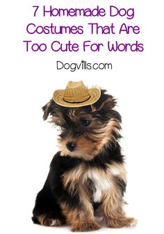 homemade dog costumes are the way to go for a cute and savvy halloween costume or