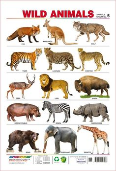 Spectrum pre-school kids learning poster educational wild animals name wall chart Wild Animals List, Zoo Animals, Animals For Kids, Animals And Pets, Animal Pictures For Kids, Wild Animals Pictures, Animals Images, Learning English For Kids, Kids English