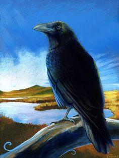 "Crows Ravens:  ""#Raven,"" by JaniceDuke, at deviantART."