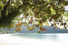 leaves and the horizon Photo by Omer E. -- National Geographic Your Shot