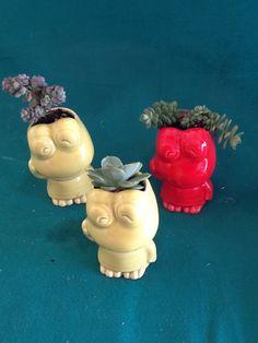 Ranas!!!! Nueva colección suculentas y cactus